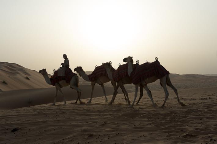 dawn camel ride