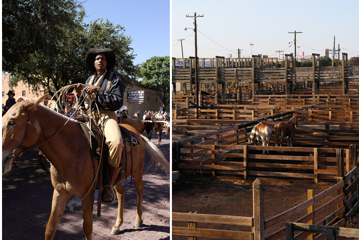 Drover, muster, Stockyards Fort Worth