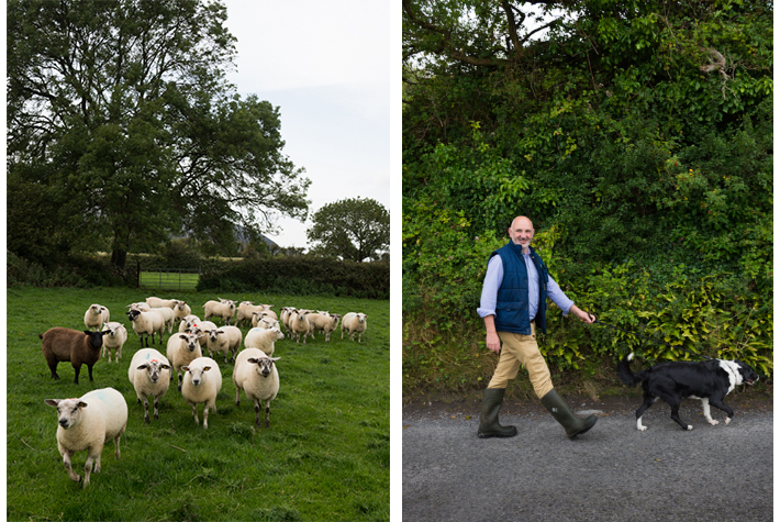 Donal Monahan and his flock.
