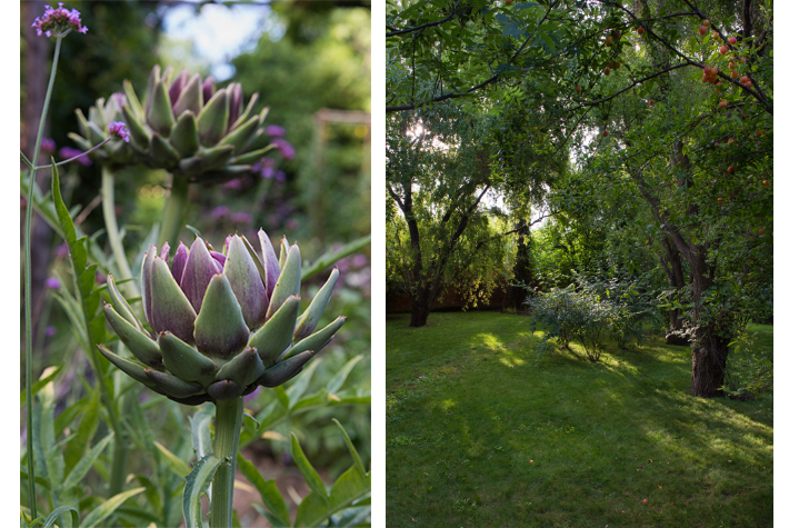 artichoke and plumbs in the garden