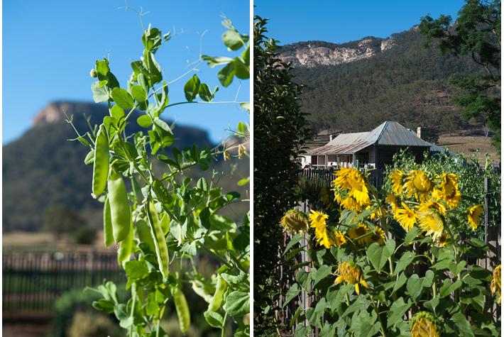 vegetable garden at the homestead