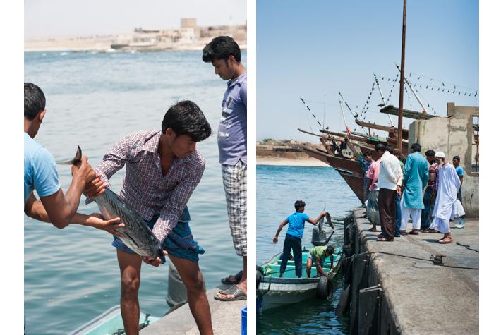 Mirbat port, bringing in the catch