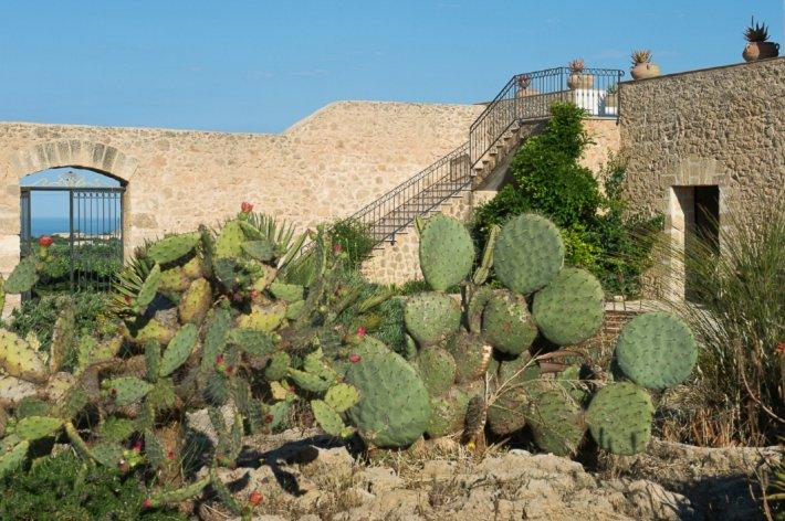 Cactus garden at baglio Donna Franca.