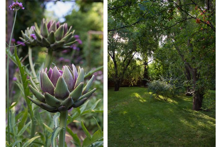 artichoke and plumbs in the garden